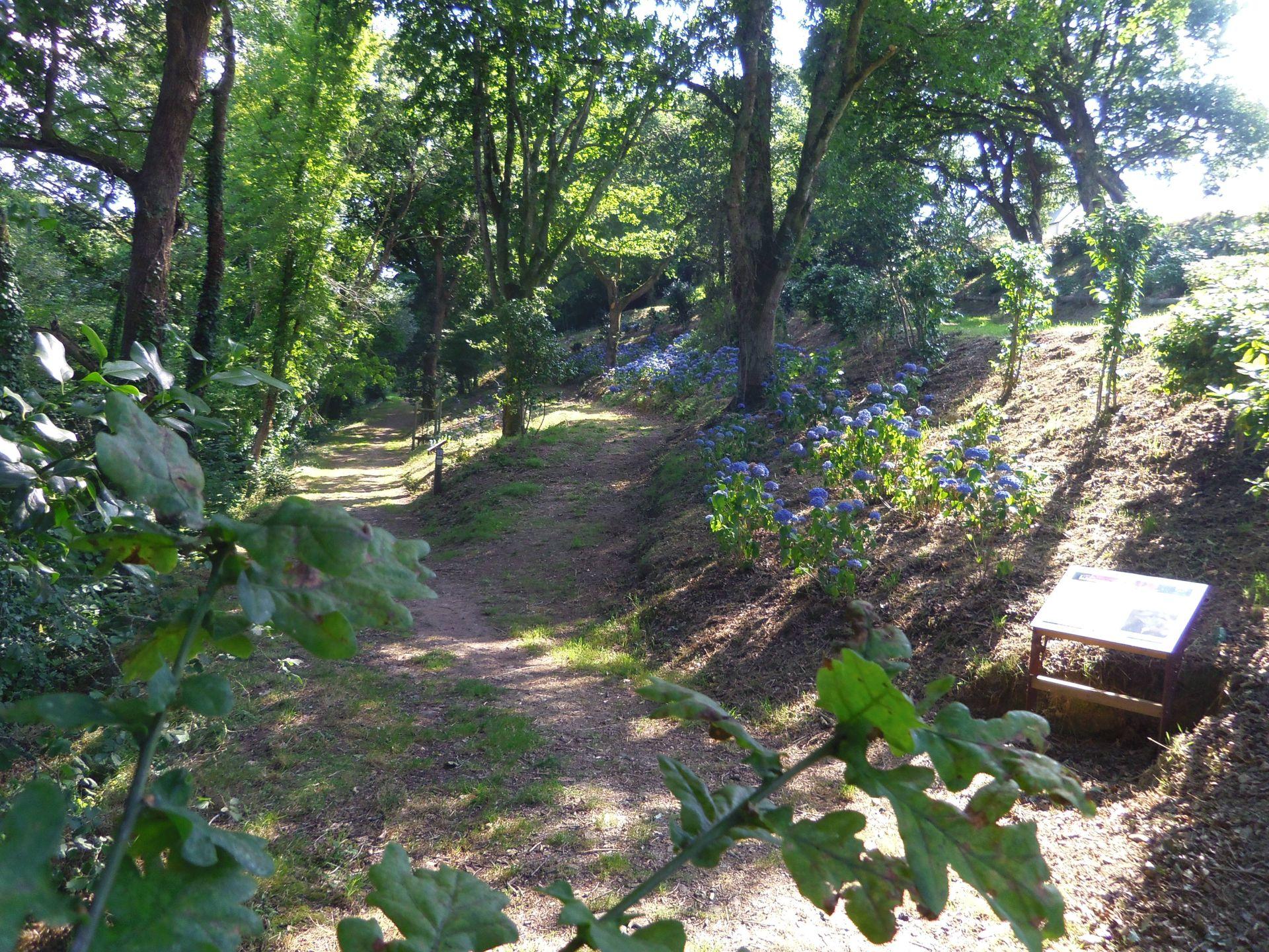 Chemin aux hortensias 1